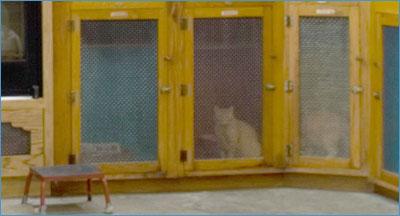 kitty-kondo3