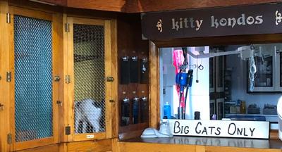 The Cat's Annex - Kitty Kondos